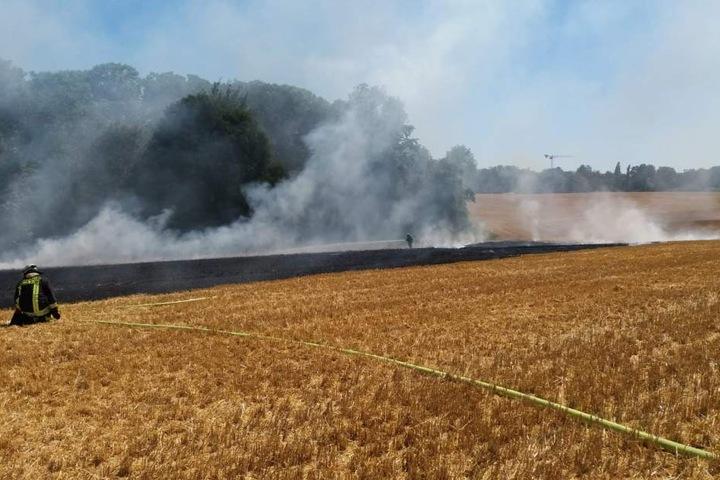 Das abgeerntete Feld war in Brand geraten.