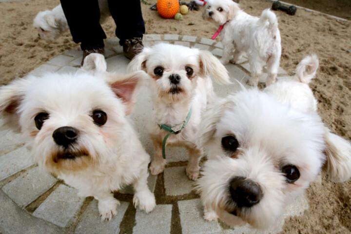 Wie viele Hunde sich genau auf dem Grundstück befanden, war zunächst unklar. (Symbolbild)