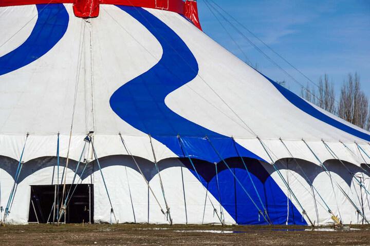 Der Zirkus gastiert zurzeit in Mainz (Symbolfoto).