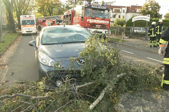 Der Baum krachte auf die Frontscheibe des Autos und rutschte dann auf die Fahrbahn.