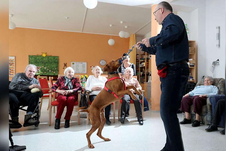 Mit kleinen Kunststücken gewinnen Olaf Ahlers (52) und Filou (6) die Herzen von Senioren.