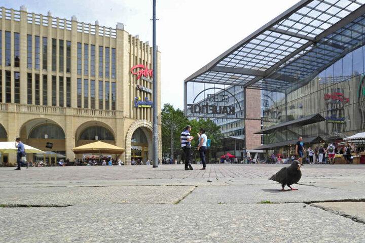 Ganz allein: Am Dienstagmittag fand sich eine einzige Stadttaube auf dem Neumarkt. Füttern sollte man die Tiere aber nicht, sie werden dadurch unselbstständig.