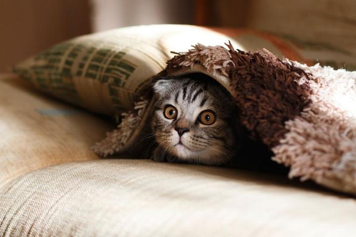 Katzen können Farben sehen. Aber anderes als ein Mensch...