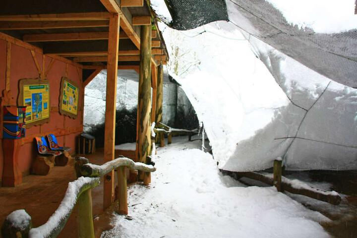 Die Netze der Voileren konnten den matschigen Schneemassen nicht standhalten. Nach einem Besuch im Vogelpark Marlow, schaute sich Harry Glawe auch im Wildpark MV um.