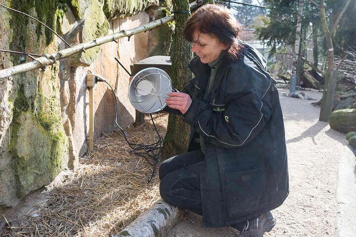 Für die Tundra-Vögel werden im Zoo Wärmelampen installiert.