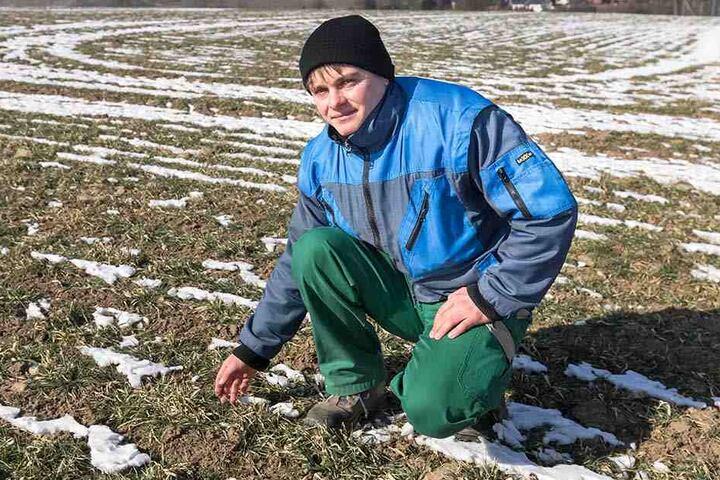 Phillip Weinitzke aus dem Vogtland bangt um das Wintergetreide. Der Boden ist mindestens zehn Zentimeter tief gefroren.