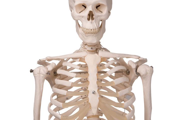 """In der eigenen Praxis des medizinischen Fachangestellten soll später mal ein Skelett namens """"Günther"""" stehen (Symbolbild)."""