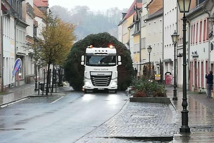 Der Baum stammt dieses Mal aus Altenhain. Per Laster wurde er in die Innenstadt gebracht.