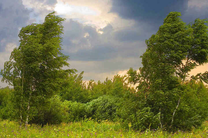 Der Deutsche Wetterdienst warnt vor umstürzenden Bäumen.