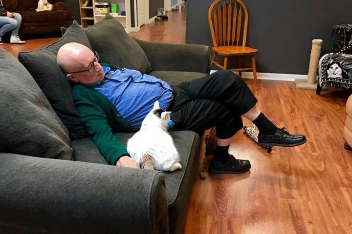 Terry Laurmen liebt Katzen und sie ihn.