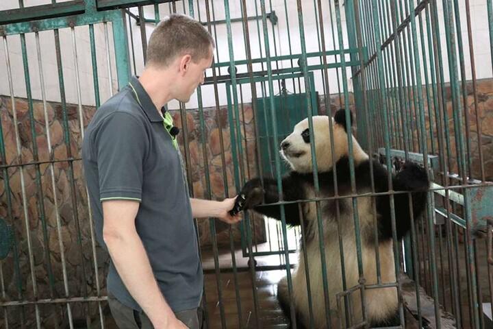 """Der Berliner Tierpfleger Christian Toll streichtelt am das Panda-Weibchen """"Meng Meng"""" in der Zuchtstation in Chengdu."""