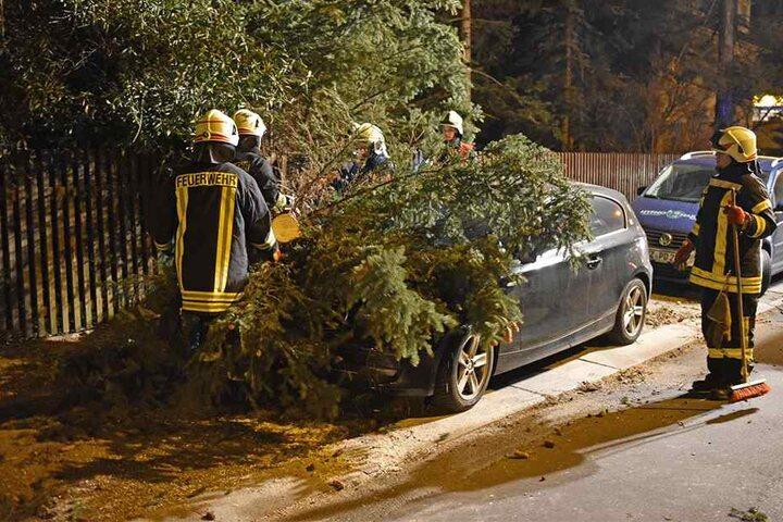 Feuerwehrleute befreiten den Wagen von dem Baum.