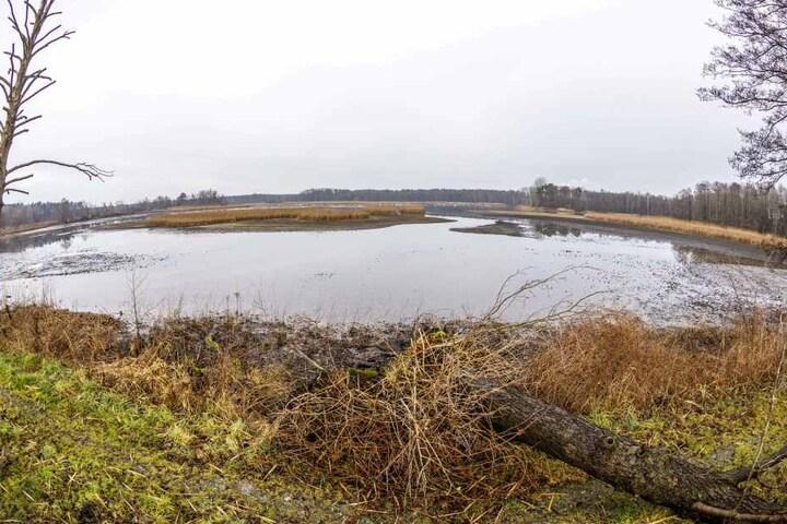 Rund um die Gewässer der Commerauer Teichgruppe ist nur noch karges Land.
