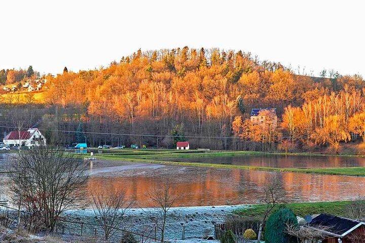 Die malerisch gelegene Teichanlage von Schröders Fischzucht direkt am Firmengelände. Insgesamt werden 40 Hektar Teiche bewirtschaftet.