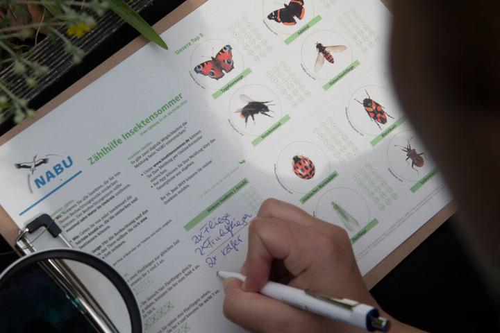 Der NABU ruft in NRW zu einer vierwöchigen Zählung von Schmetterlingen auf (Symbolbild).