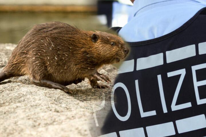 Die Polizei konnte das Tier schließlich zu einem Bach führen. (Symbolbild / Fotomontage)