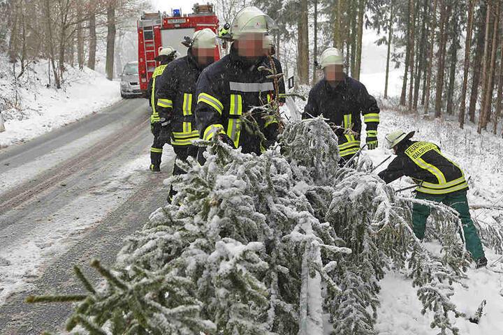 In Waldenburg musste die Feuerwehr eine Fichte beseitigen, sie war unter der Schneelast zusammengebrochen.
