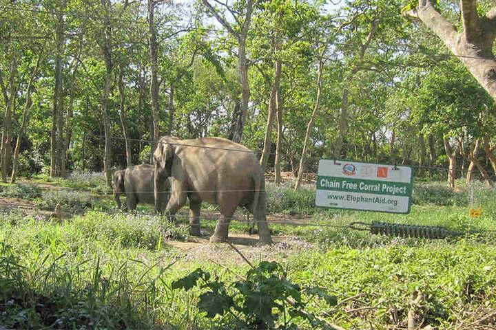 Elefanten im National-Park Chitwan in Nepal.