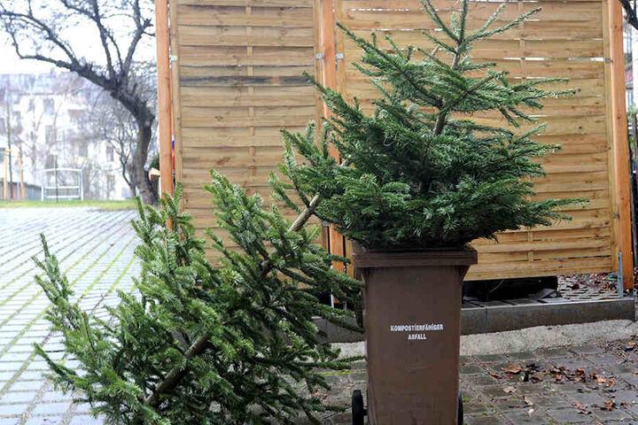 Ab Montag können die Weihnachtsbäume neben die Biotonne gelegt werden.