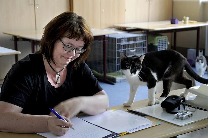 Privatinteressenten kamen zu der Veräußerung nicht. Stattdessen erwarben die derzeitigen Pflegestellen die Katzen und Hunde vom Landratsamt.