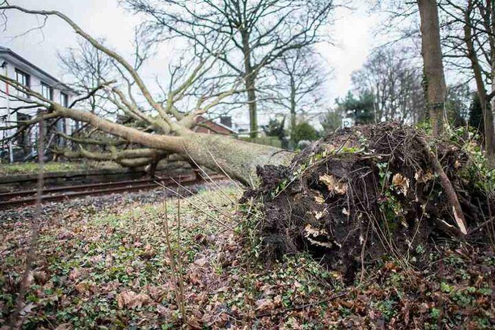 Ein umgestürzter Baum liegt auf den Gleisen einer Zugstrecke.