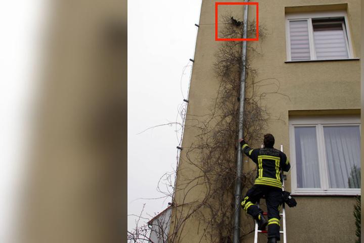 Die Feuerwehr rückte mitsamt Leiter an. Kurz darauf flitzte das Eichhörnchen los.