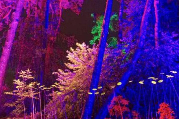 """Beim """"Waldleuchten"""" können Besucher beeindruckende Lichteffekte erleben."""