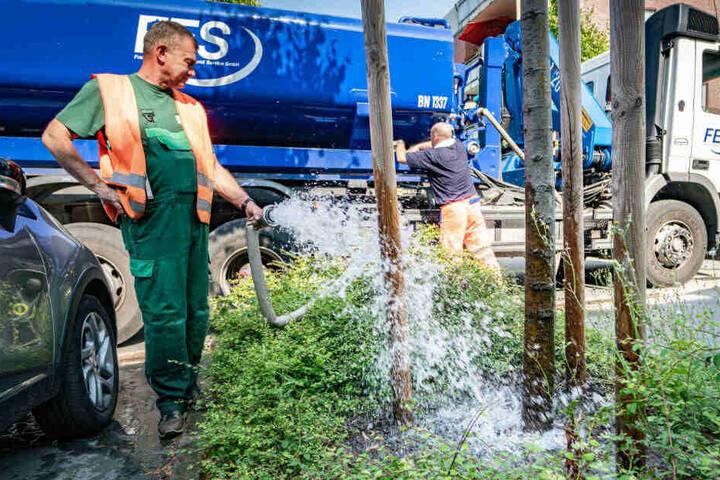 Die Stadt bewässere vor allem Neupflanzungen bis zum fünften Standjahr, doch nun haben auch ältere Bäume mit der Trockenheit Probleme.