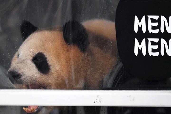 Meng Meng.