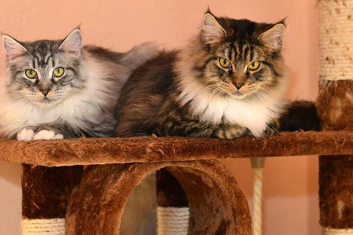 Acht Katzen haben aktuell beim Tierschutzverein Mittweida Unterschlupf  gefunden.