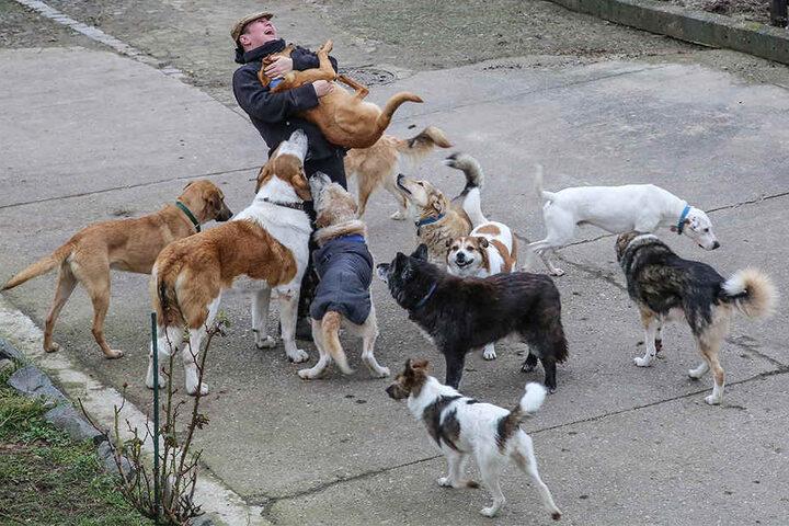 Die Rudelführerin: Almuth wird von ihren Hunden stehts freudig umringt.