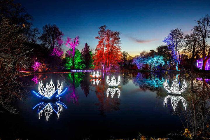 Kunstvolle Seerosen, illuminierte Bäume: Der Pillnitzer Schlosspark ist in ein weihnachtliches Lichtermeer getaucht.