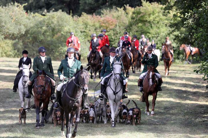 Bei der unblutigen Schleppjagd für den guten Zweck nahmen auf Usedom 80 Reiter und 30 Hunde teil.