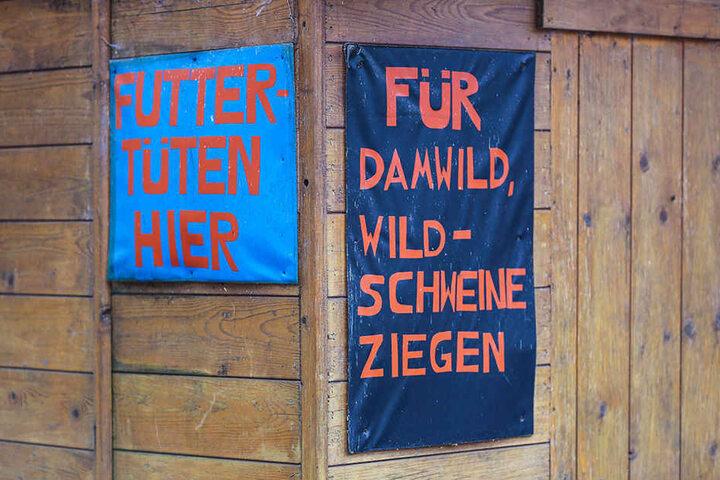 Mit den Haferkörnern aus den Futtertüten konnten Damwild, Wildschweine und Ziegen gefüttert werden.