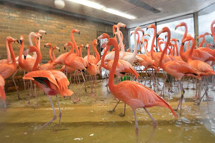 Zwei Flamingos fanden bereits den Tod.