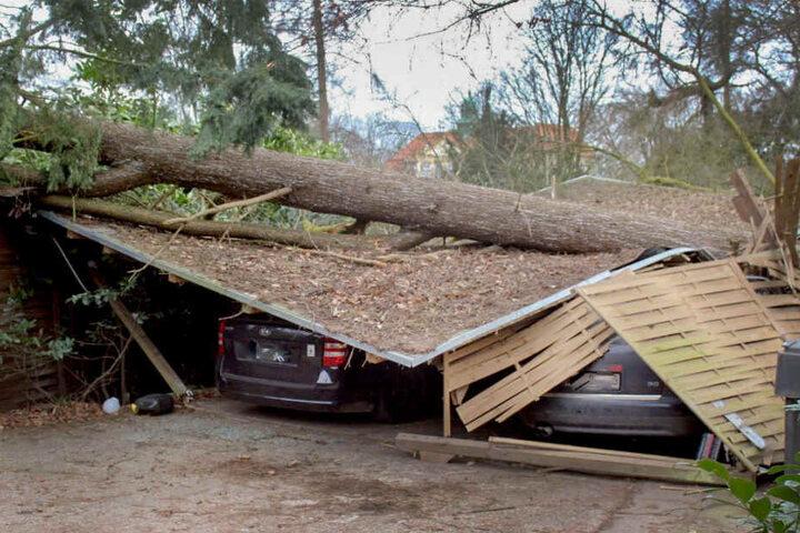 Umgestürzte Bäume sorgten auch für Gebäudeschäden wie hier in Viersen.