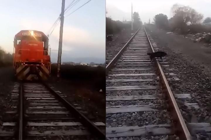 Ausschnitte aus dem Handy-Video des Lokführeres.