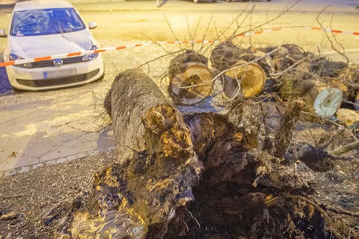 In der Neuwerkstraße in Erfurt hat ein Baum einen Golf stark beschädigt.