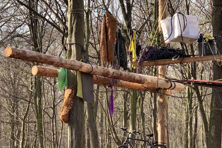 Die Aufnahmen zeigen frisch gefällte Bäume, die für Hütten verwendet wurden.