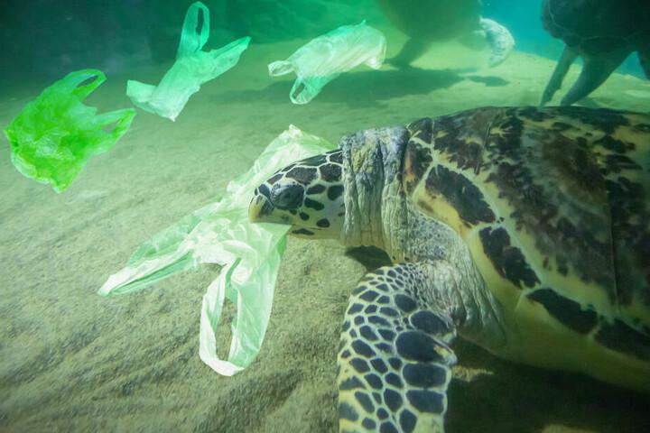Das sich immer häufiger in den Weltmeeren ansammelnde Plastik stellt für viele Tiere eine große Gefahr dar.
