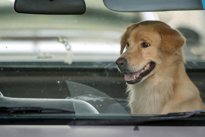 Hunde sollten auch bei milden Temperaturen nicht im Auto gelassen werden. (Symbolbild)
