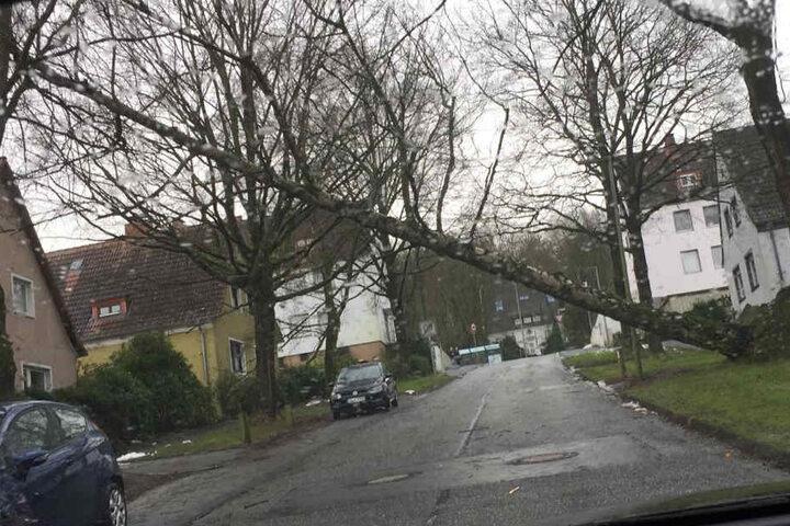 Am Wellensiek hat der Sturm einen großen Baum entwurzelt.