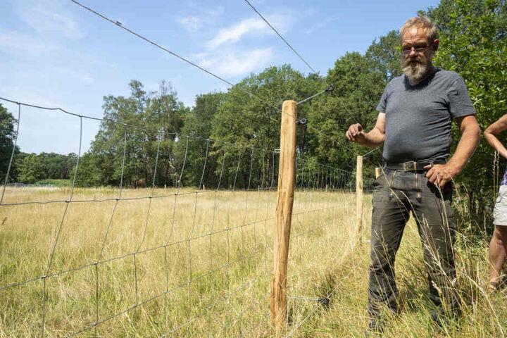 Elektrozäune, wie hier in Nordrhein-Westfalen, sollen Herden vor Wolfsattacken schützen.