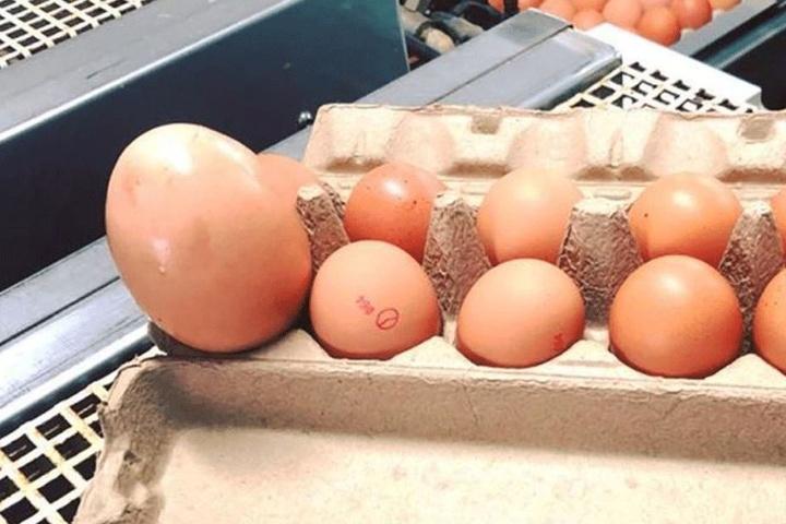 Der Vergleich mit normalen Eiern ist der Hammer!