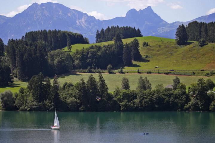 Ein Segelboot fährt vor dem Panorama der Alpen über den Forggensee. Am Sonntag das Wetter in Bayern nochmal schön sommerlich werden.