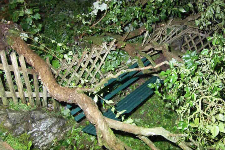 Die heftigen Sturmböen brachten zahlreiche Bäume zum Einstürzen.
