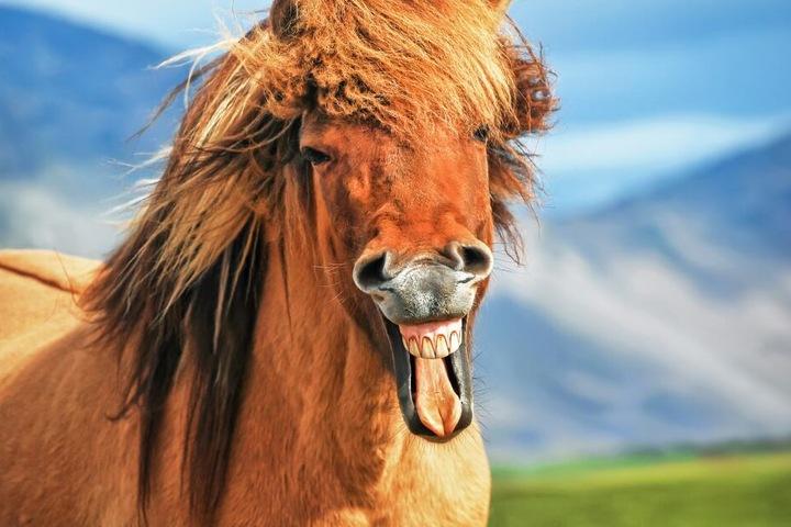 Insgesamt waren sechs Pferde und ein Esel ausgebrochen. Die Polizei konnte alle Tiere einfangen.