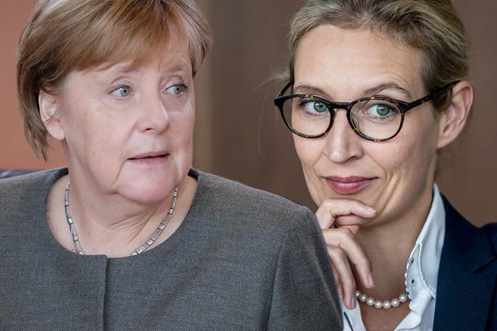 Von Angela Merkel (63) bis Alice Weidel (38) - auch für die Männer ist was dabei.