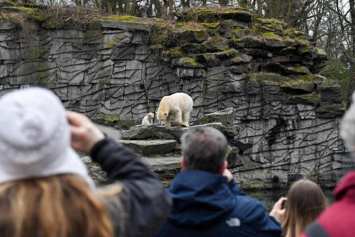 Im Blickpunkt: Eisbären-Mama Tonja und ihr kleines Baby sind derzeit das beliebteste Foto-Motiv im Tierpark.