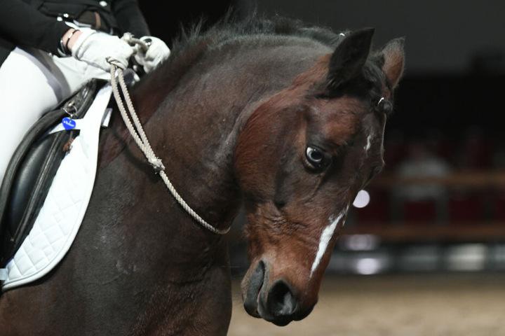 Pferde und ihr Können kann man am Wochenende in Thüringen sehen.
